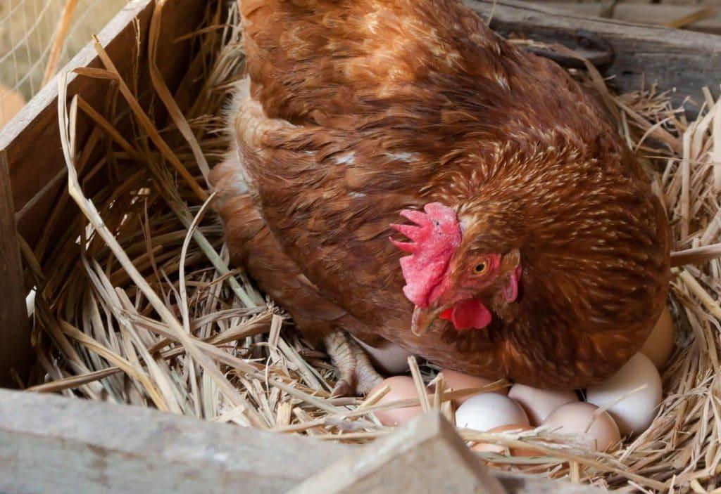 Bio eieren
